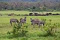 Nature of Arusha National Park (16).jpg