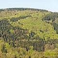Naturpark Thüringer Wald.Blick vom Reinhardsberg.00.ajb.jpg