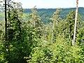 Naturschutzgebiet Hesel-, Brand- und Kohlmisse, Blick in das Tal der Kleinen Enz - panoramio.jpg