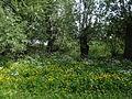 Naturschutzgebiet Heuckenlock 21.05.2014 Phase 24.JPG