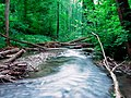 Naturschutzgebiet Neandertal NRW, Fluss Düssel, Fotograf J. & N. Suchorski 3.jpg
