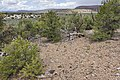 Near Cactus Park - Flickr - aspidoscelis.jpg