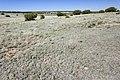 Near Clines Corners - Flickr - aspidoscelis.jpg