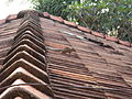 Negombo, roof with squirrel.JPG