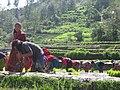 Nepali Scenario.jpg