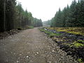 New Forest Track Across Calder Moss - geograph.org.uk - 1599447.jpg