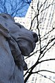New York Public Library lion.jpeg