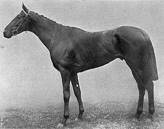 Night Hawk (horse) British-bred Thoroughbred racehorse