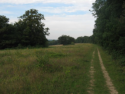 North Downs Way beside Keepers Hill Wood - geograph.org.uk - 2058672