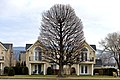 Oak Tree Resting - panoramio.jpg