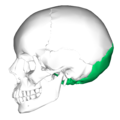 Occipital bone lateral5.png