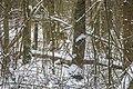 Op de achtergrond een ree winter mallebos.jpg