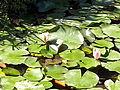 Orto botanico di Napoli 03.jpg