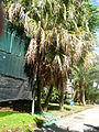Orto botanico di Napoli 209.JPG