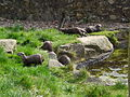 Otters dash (2393768404).jpg