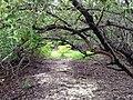 Overgrown Pathway - panoramio.jpg