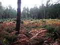 Overgrown Tumuli - geograph.org.uk - 587233.jpg