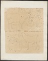 Ovis aries - 1700-1880 - Print - Iconographia Zoologica - Special Collections University of Amsterdam - UBA01 IZ21300063.tif