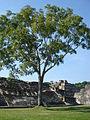 Palenque (5016532892).jpg
