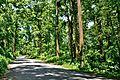 Parakhowa forest.jpg