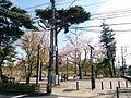 Park along 井の頭恩賜公園 野球場.jpg