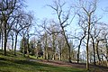 Park trees - geograph.org.uk - 713858.jpg
