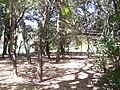 Parque - panoramio.jpg