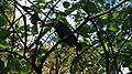 Parque das Aves 1.jpg