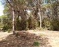 Parque de Doñana 20210610 61.jpg