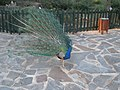 Parque de Los Pinos (Plasencia) 22.jpg