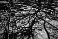 Passeio Público em Sombras e formas.jpg