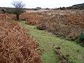 Path along Black Gutter Bottom, New Forest - geograph.org.uk - 277144.jpg