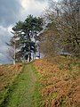 Path to the Croft Ambrey ridge - geograph.org.uk - 1179720.jpg