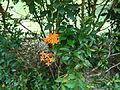 Penang Botanic Gardens (47).JPG