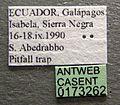 Pheidole flavens casent0173262 label 1.jpg