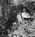 Photograph of White Pine Stump - NARA - 2129140.jpg