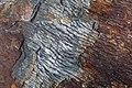 Phyllites (Anakeesta Formation).jpg