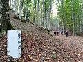 Pietra segnaletica del Cammino di San Francesco nella faggeta di Bosco Luta.jpg