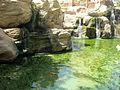 PikiWiki Israel 30044 Geography of Israel.JPG
