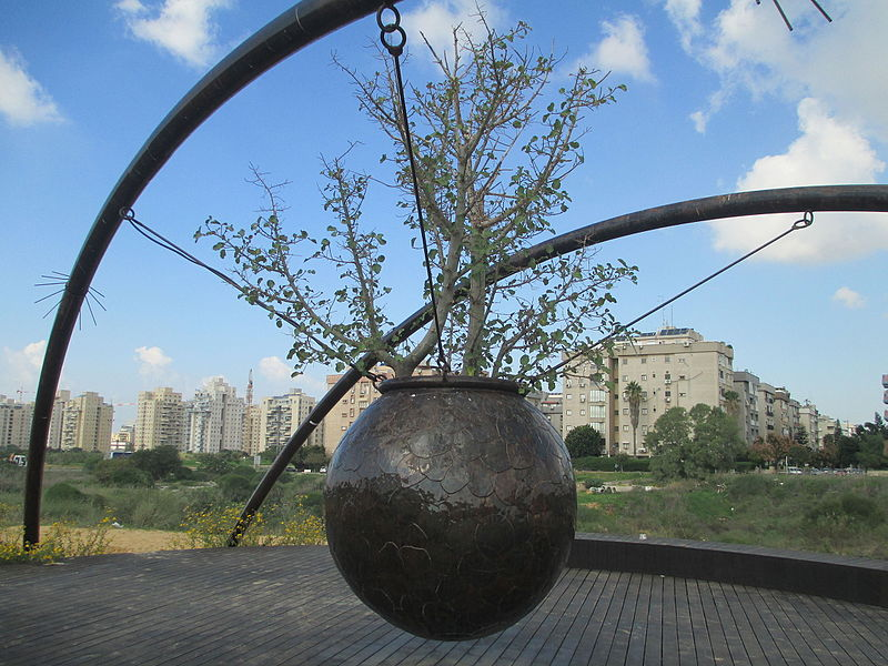 מיצג כד עץ השקמה בחולון