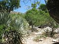 Pima Canyon Trail 4th Crossing.JPG