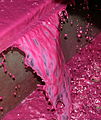 Pinot noir juice from press pan.jpg