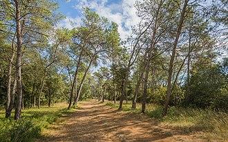 Castries, Hérault - A wood called Les Pins