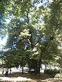 Pionirski park u Beogradu 010.JPG