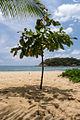 Playa Manzanillo Puerto Escondido.jpg
