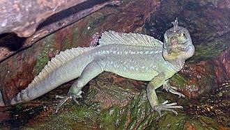 Lepidosauromorpha - A plumed basilisk