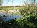 Pond near Bury Farm - geograph.org.uk - 395096.jpg