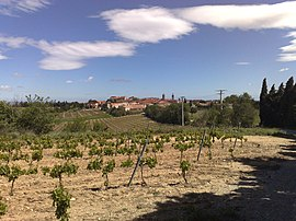 Vineyards and the village of Ponteilla