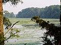 Post Bayou P6240045.jpg