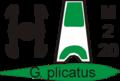 Poster galanthus plicatus.png